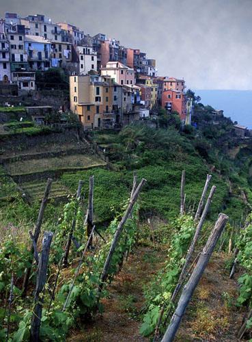 Viñedos de Cinque Terre
