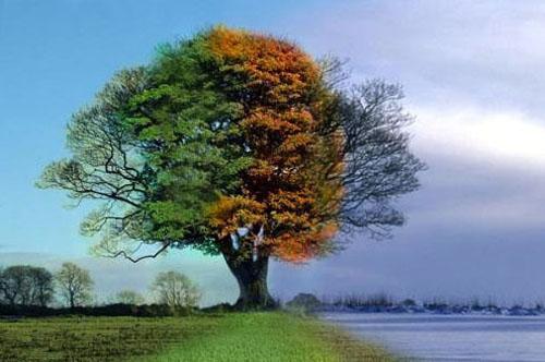 Cuatro estaciones sobre un árbol